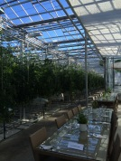 Amazing greenhouse, Friðheimar, that utilizes the geothermal energy of Iceland (& makes delicious soup). Selfoss, Iceland (2015).