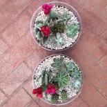 Cacti Mom Day 1. (2016).